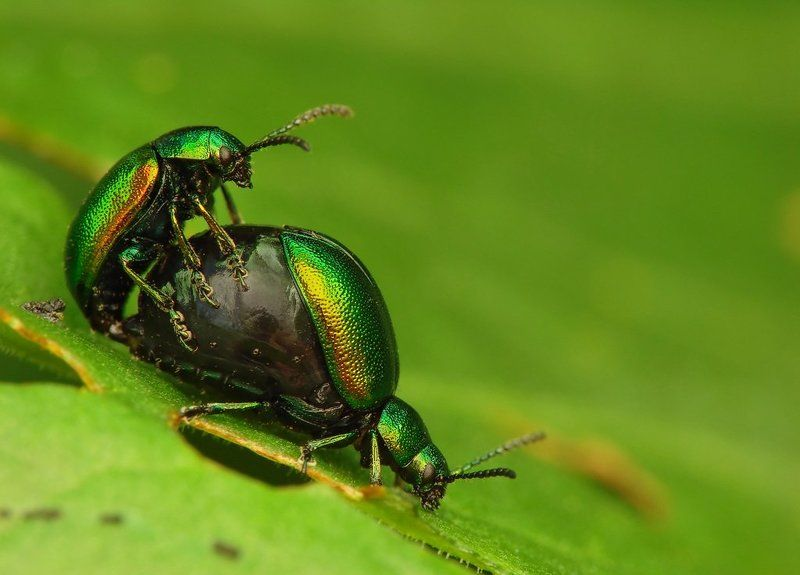 macro, insects, beetles Springphoto preview