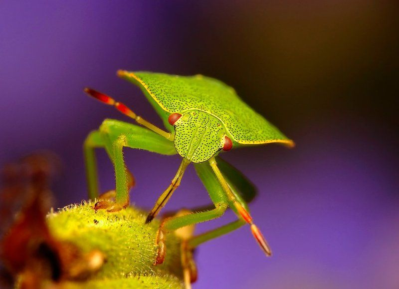 macro, insects, Drinkphoto preview
