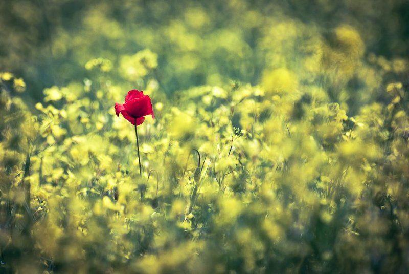 ...samotny...photo preview