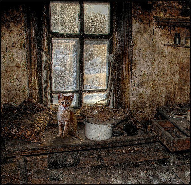 Об одиноком рыжем котёнке в интерьереphoto preview