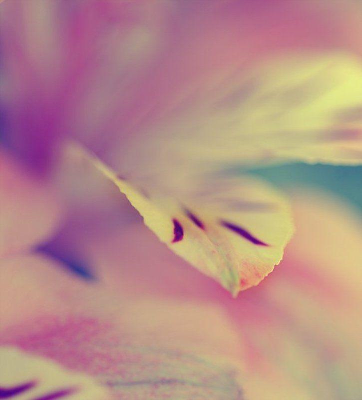 цветы AMORphoto preview