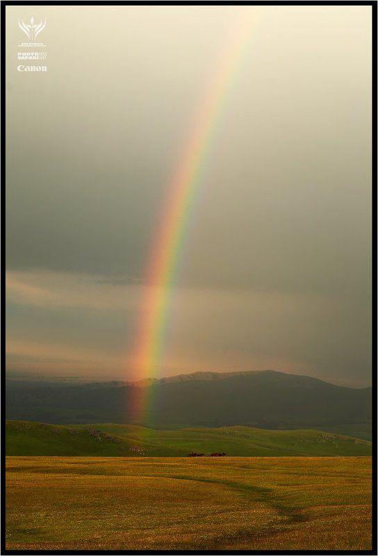 photo, safari, kazakhstan, nature, alpine, alatau, заилийский, алатау По зелёным холмам...photo preview