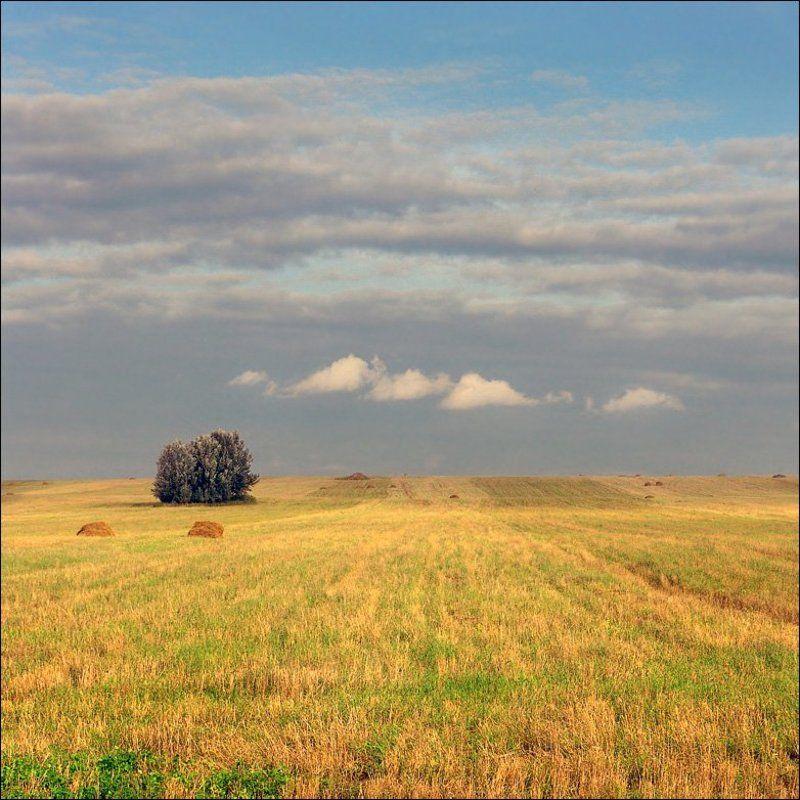 лето, небо, воздух Про мягкость и воздушность лета...photo preview