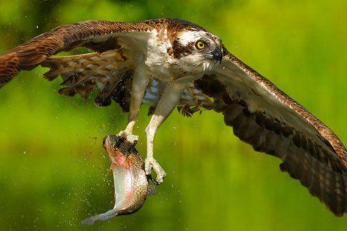 рыбка к обеду