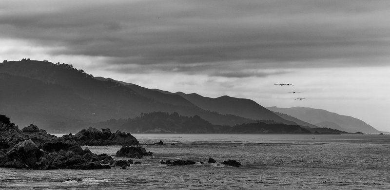 monterey, california, pacific, ocean, rocks, birds, fly, away Улетают...photo preview