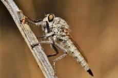 Злобный мух