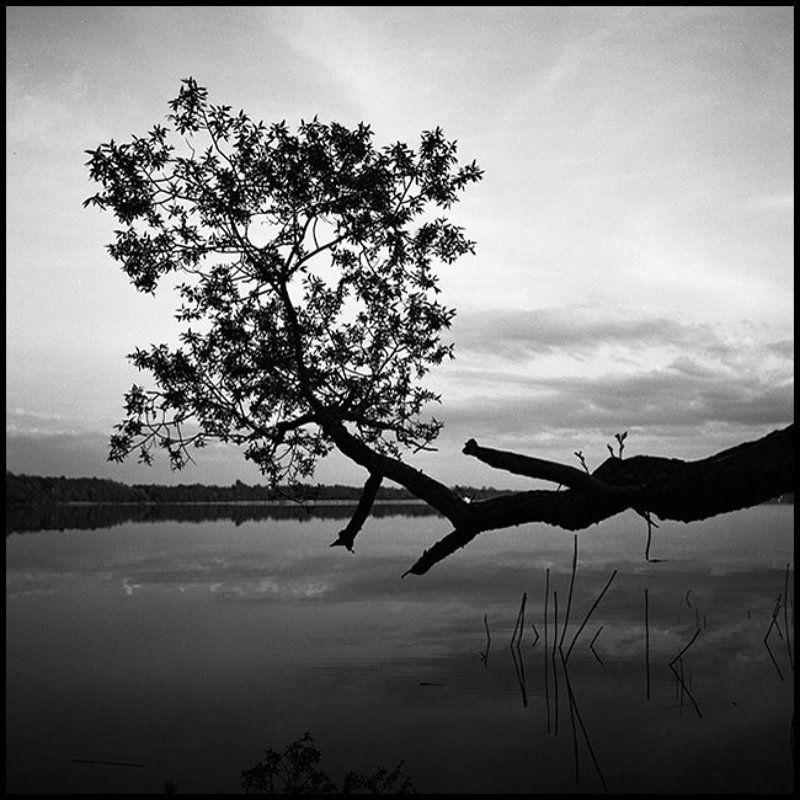 Орлинское озеро. Поздний вечер.photo preview