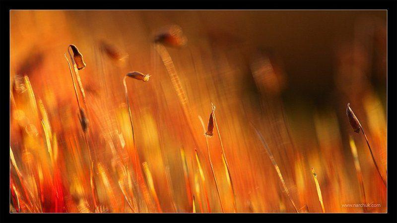 И колосился мох...photo preview