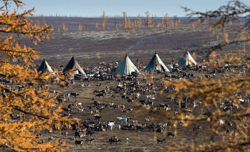 осень, чумы, стойбище, север, пейзаж, жизнь на краю земли северная осеньphoto preview