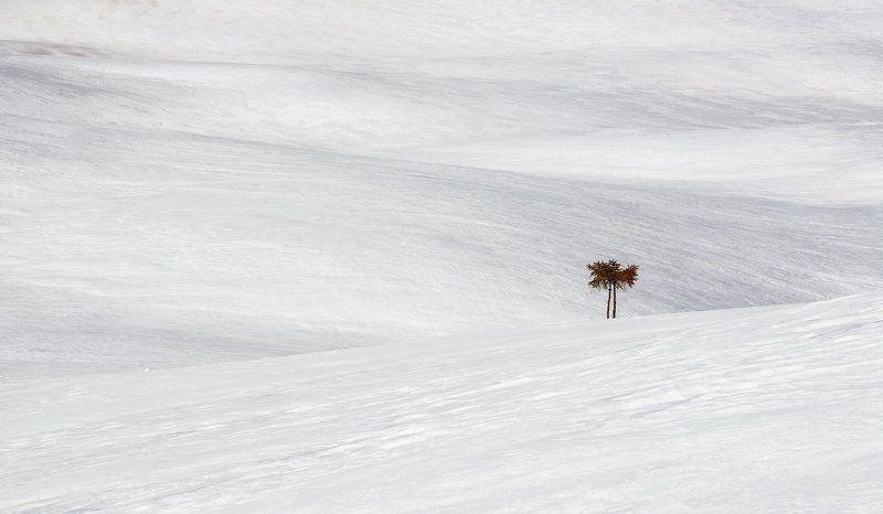 Снежная пальмаphoto preview