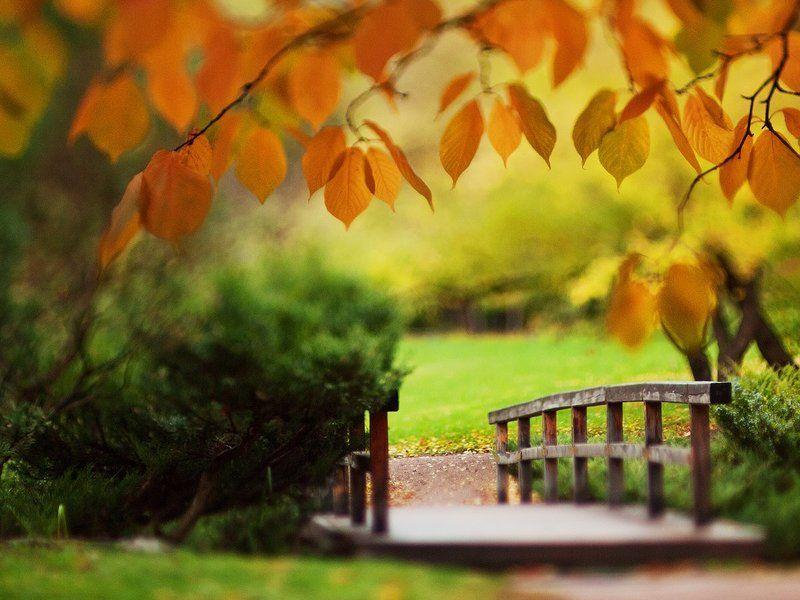 autumn, tilt, bokeh, nature Tilted autumn.photo preview