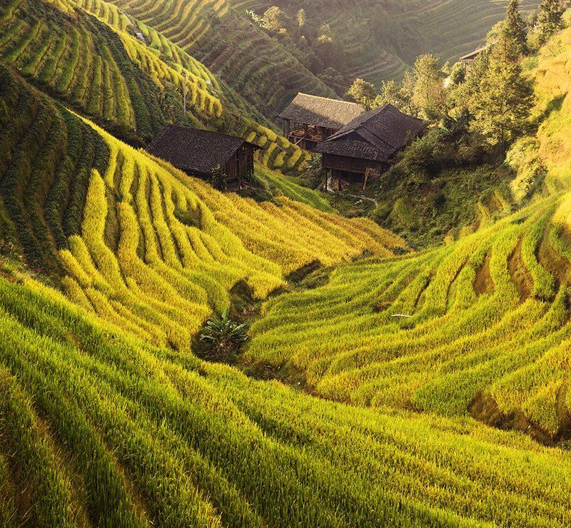 guilin, ping\\\'an, rice, terrace Green waves.photo preview