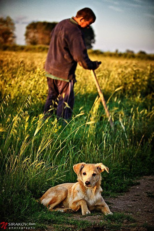 bulgaria, landscape, field, man, dog, horse, autumn Осенное....photo preview