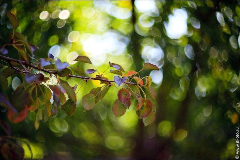 картинки, гелиос, 40-2, 85mm, f1.5 Картинки на гелиос 40-2photo preview