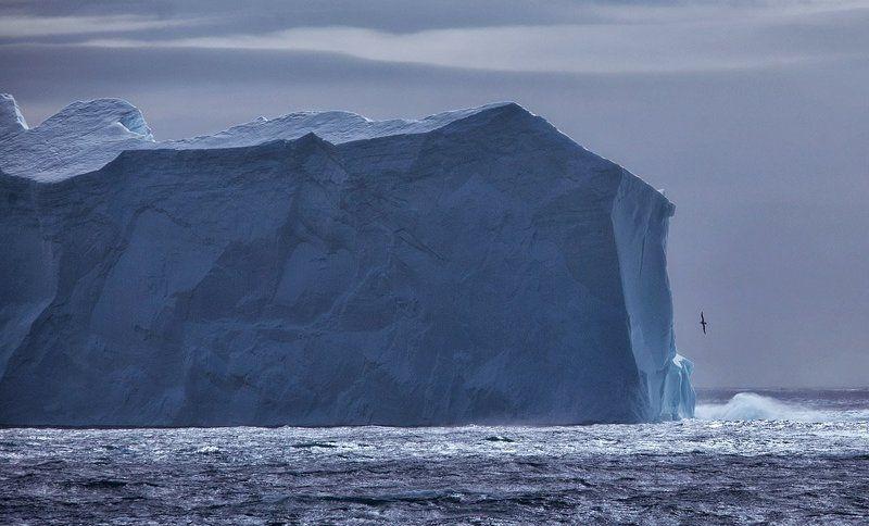 антарктика, георгия Южная Георгия 1photo preview