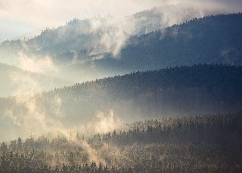 карпаты, осень, утро, свет, лес ...Линии...photo preview