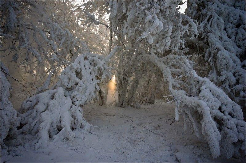снег, мороз, солнце О том, как приятно повстречать солнечные лучи во время прогулки по безмолвному царству холода и снегаphoto preview