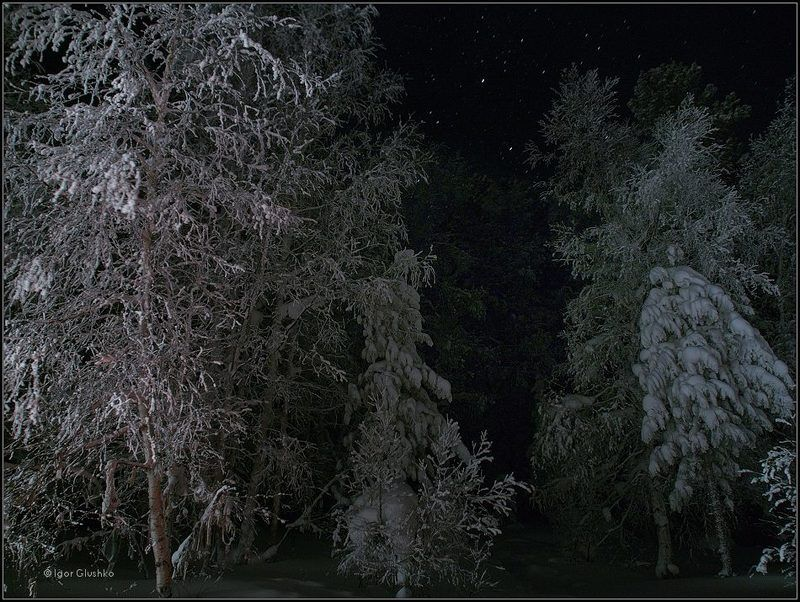 тайга, зима, ночь Таежная зимаphoto preview