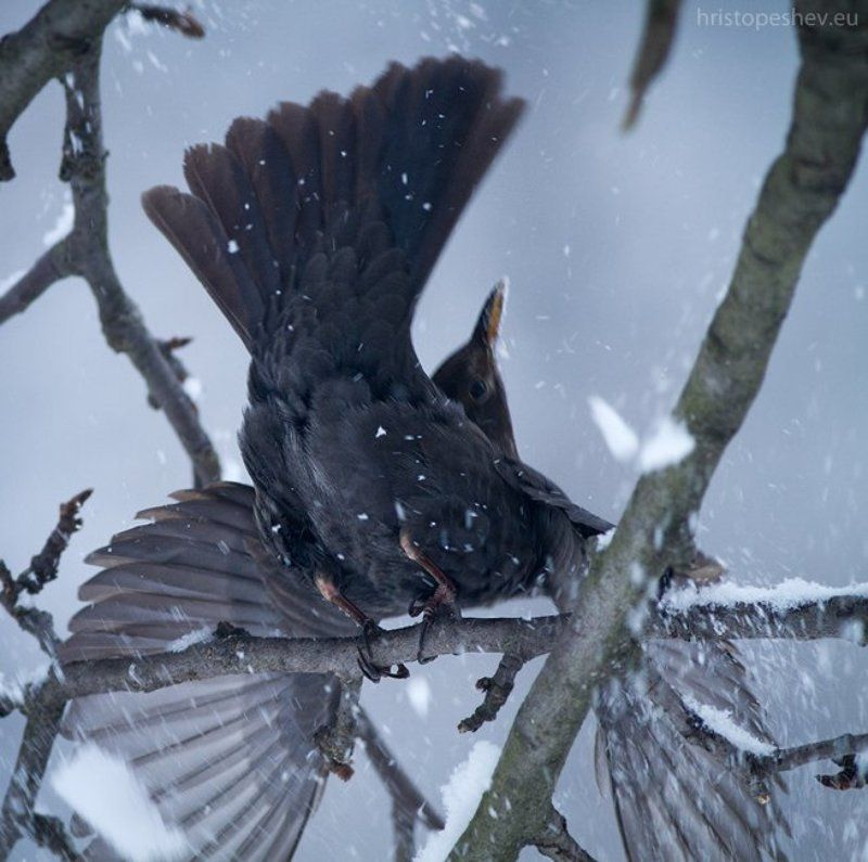 Birds in my garden / Птицы в садуphoto preview