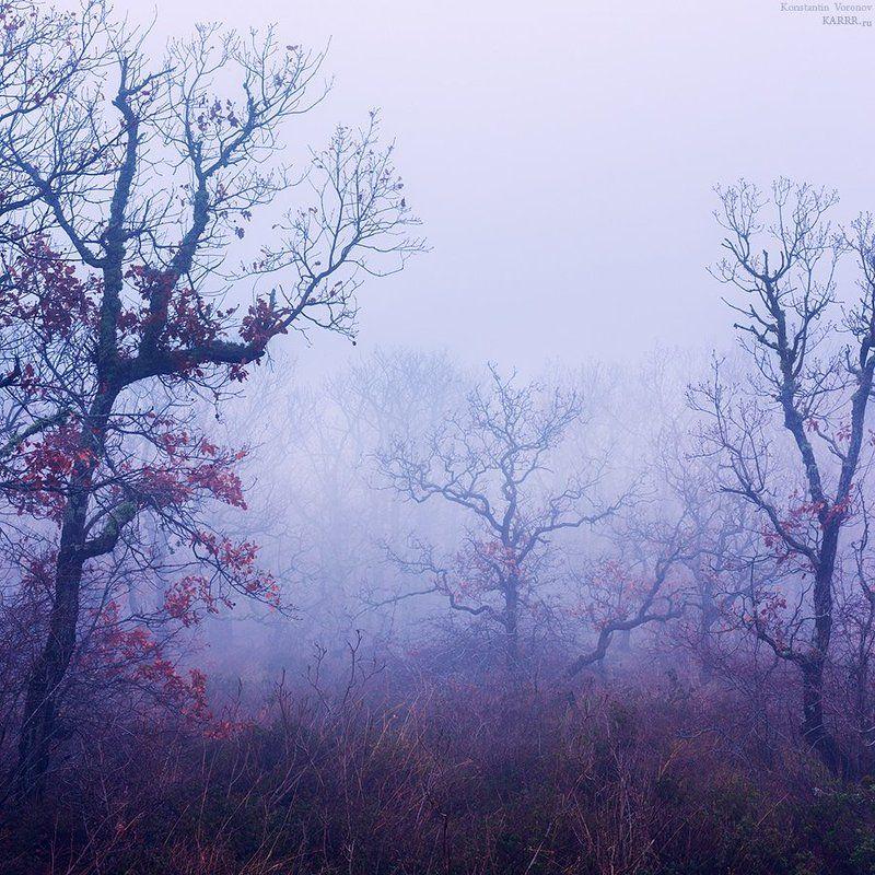 Туманная Медведь-Гора.photo preview
