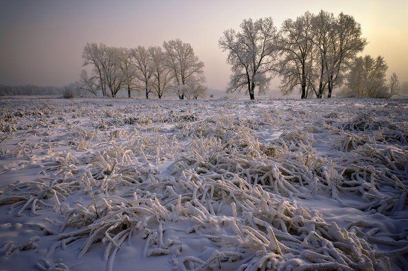 снег, мороз, солнце Зимний вечерphoto preview