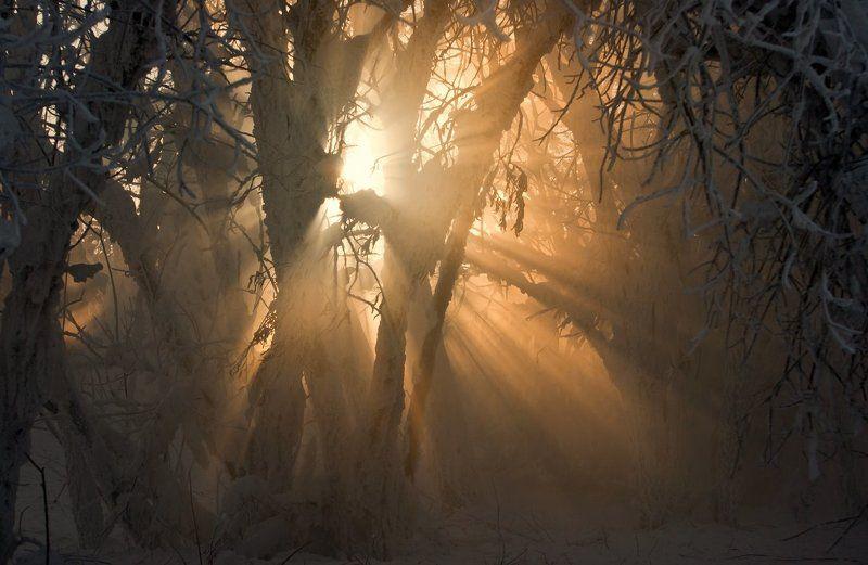 свет, солнце И солнца нежные лучи вдруг озарили царство мрака...photo preview
