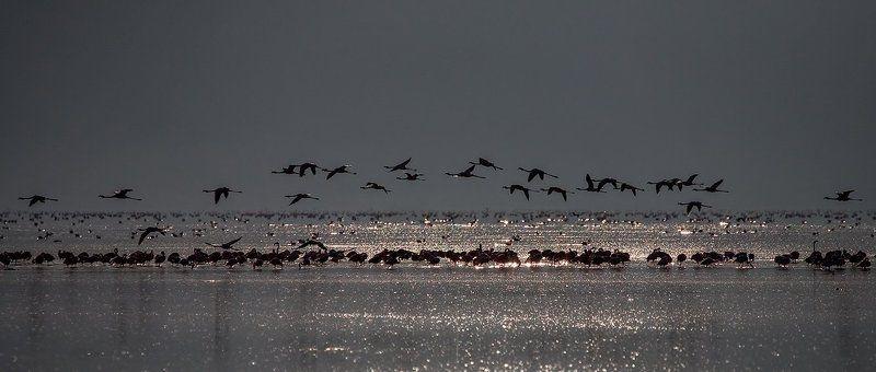птички, фламинго, озеро, вода, пеликаны птичкиphoto preview