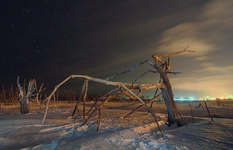 Мировое началось во мгле кочевье: Это бродят по ночной земле — деревья...photo preview