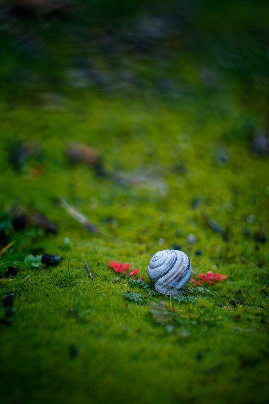 snail, shell, grass, green, leaves Angelphoto preview
