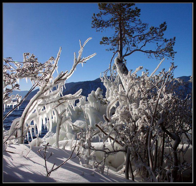 Маральник замороженный.photo preview
