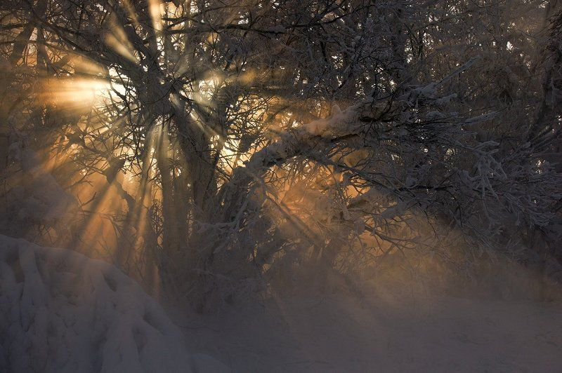 свет, солнце, ветки, зима, туман И солнца теплые лучиphoto preview