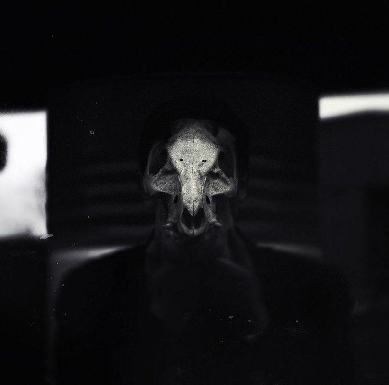 skull and cross-bonesphoto preview