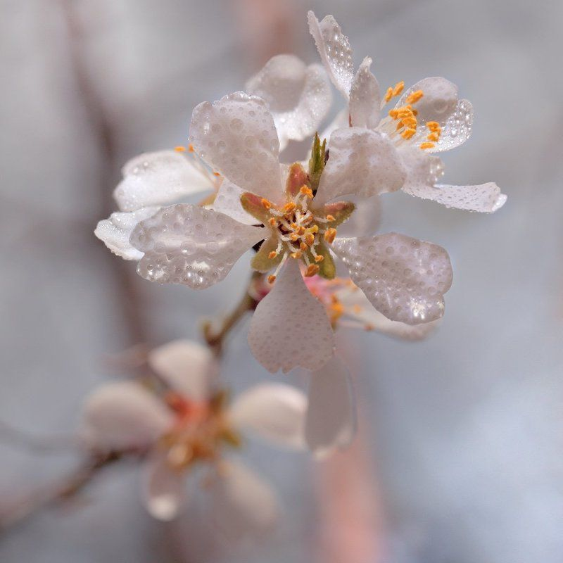 С Весной)photo preview