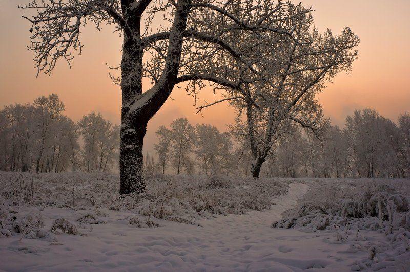 Начало зимнего дняphoto preview