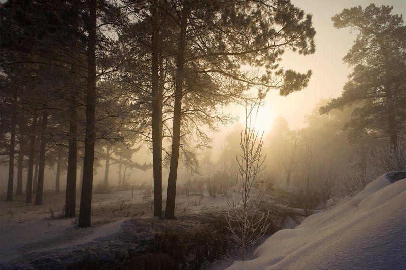 Туманное утро ранней весныphoto preview