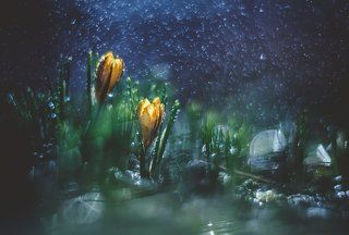 ...космическая весна....
