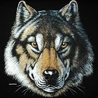 Portrait of a photographer (avatar) Wolf (Maky)