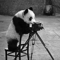 Portrait of a photographer (avatar) Sergii Dudko