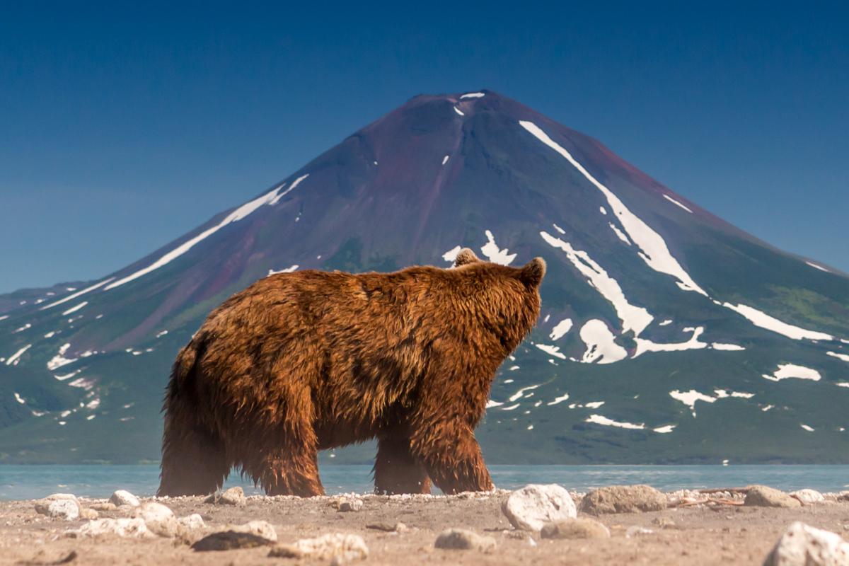картинки камчатский медведь для девушки маки