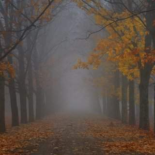 Фото фото обнаженная в осеннем лесу как старик ебет