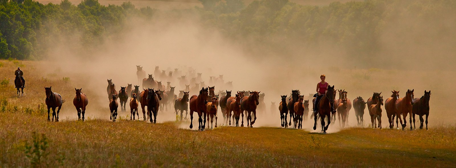 кони,лошади,пыль,табун, Fotojazz