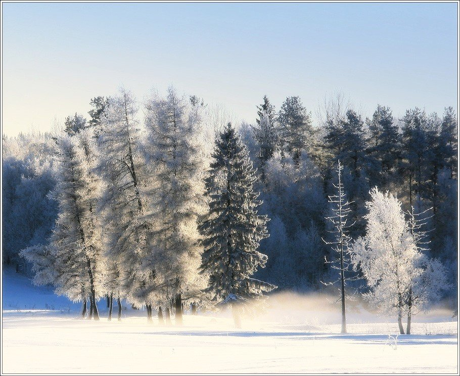 зима, сенг, метель, лес, Григорий Иващенко