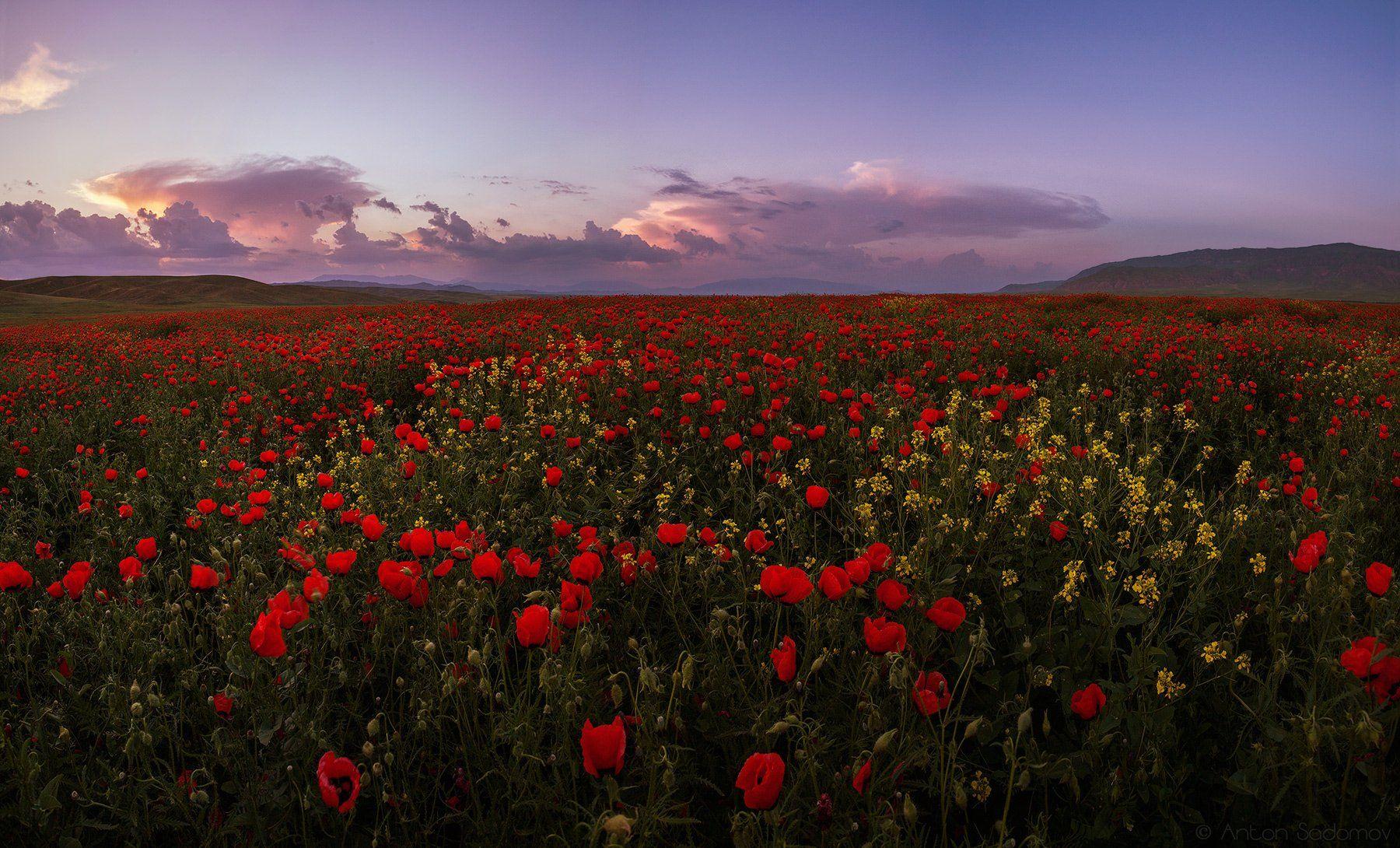 таджикистан, маки, закат, Антон Садомов