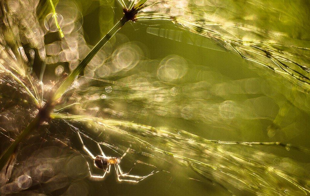 паук, блики, Юлия Втюрина