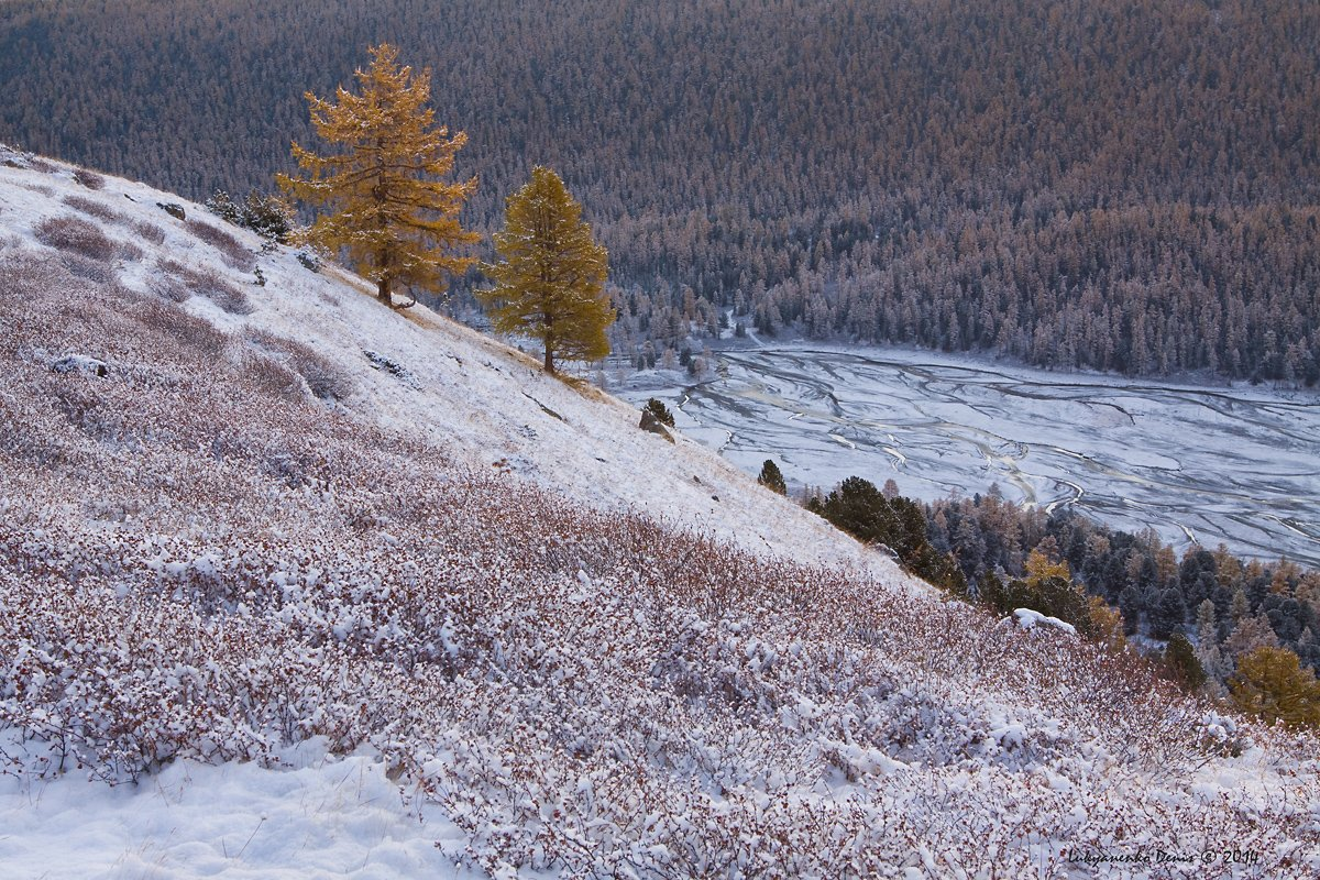 2014, Актру, Алтай, Горы, Деревья, Осень, Россия, Снег, Лукьяненко Денис