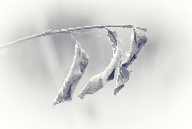 чб, листья, природа, BezOdezhdi
