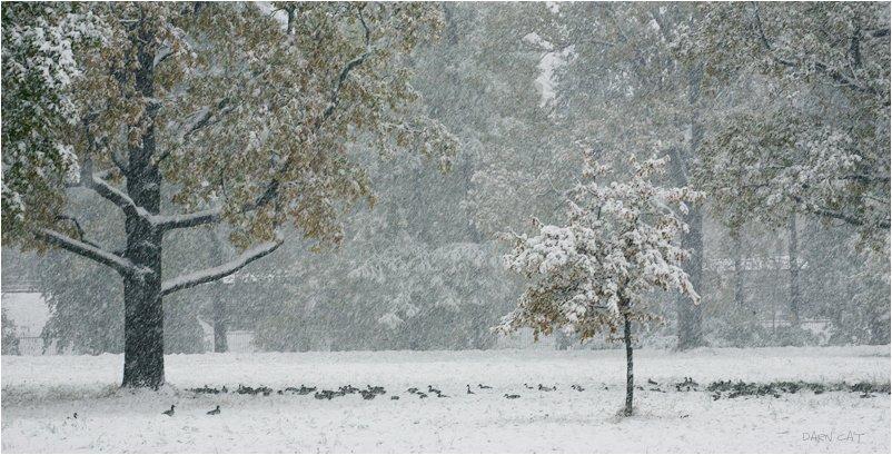 зима, первая, метель, осень, утки, пруд, Darn Cat