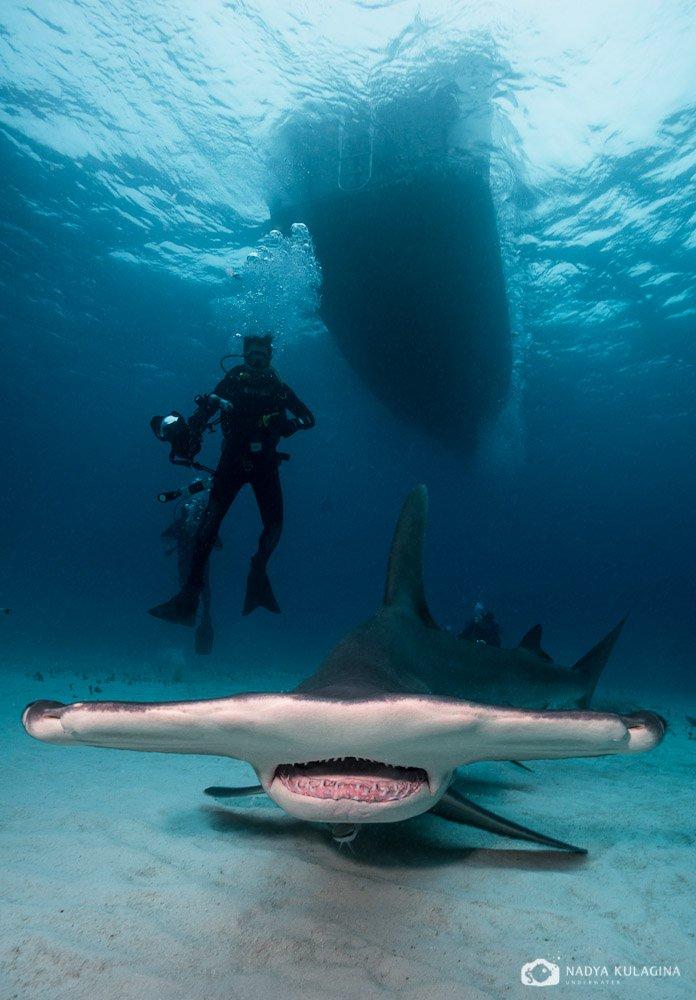 подводное фото,, nadeika
