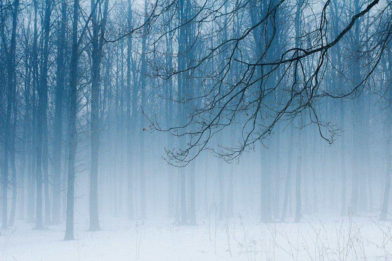 пейзаж лес туман весна снег природа минимализм , Сергей Зимин
