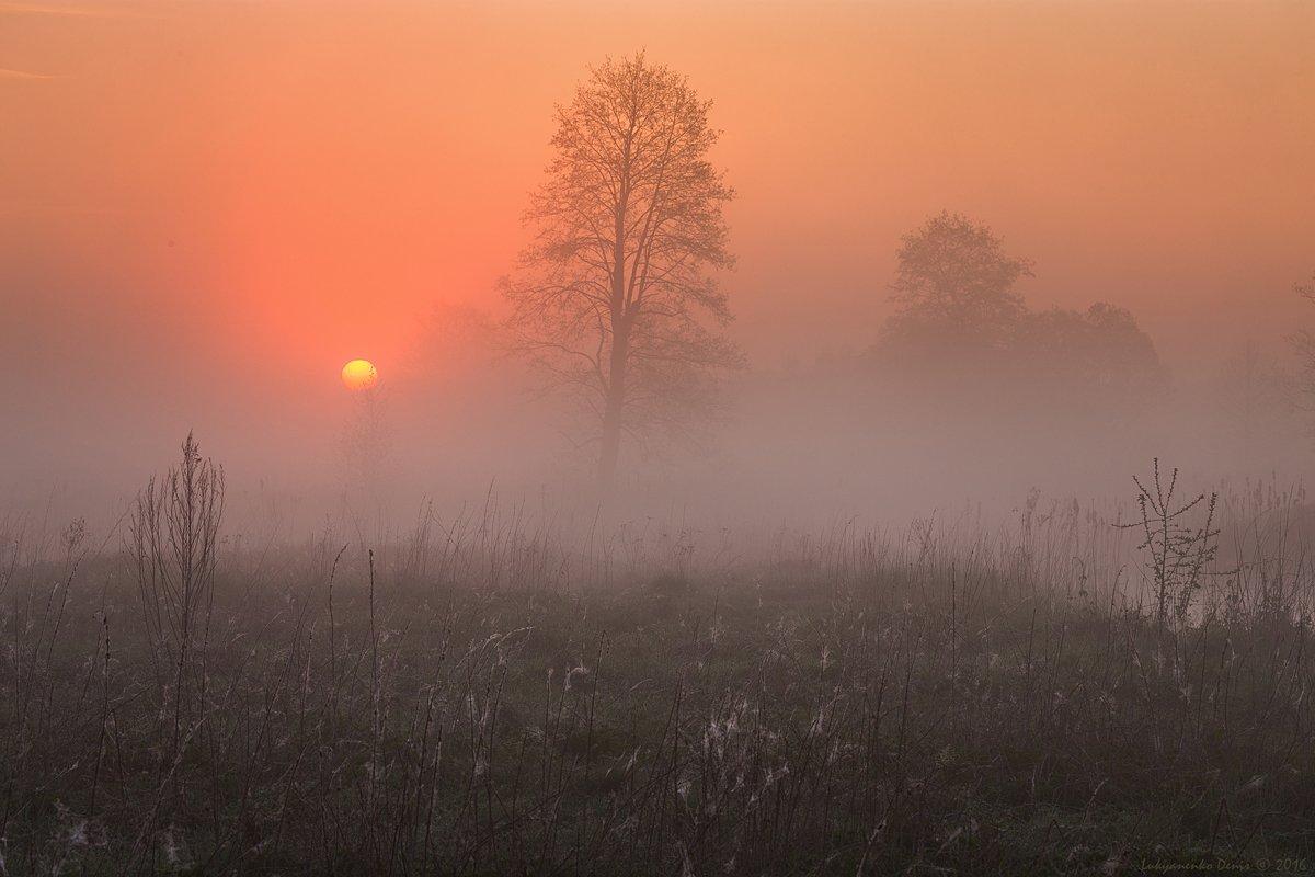 2016, весна, деревья, паутина, рассвет, солнце, туман, утро, Лукьяненко Денис